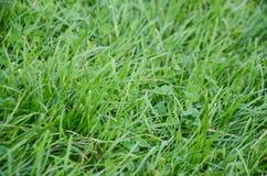 Fond de vert d'herbe Photos stock