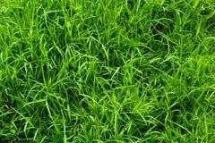 Fond de vert d'herbe Photographie stock