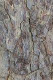 Fond de verticale de texture d'écorce d'arbre Photos libres de droits