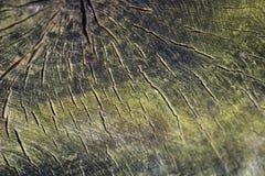 Fond de vieil arbre coupé Fond en bois de texture images libres de droits