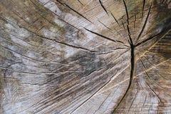 Fond de vieil arbre coupé Fond en bois de texture photo stock