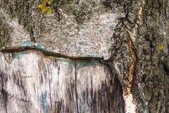 Fond de vieille écorce d'arbre Image stock