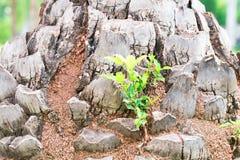Fond de vigne d'écorce Peut être employé pour des éléments de conception ci-dessus Photos libres de droits