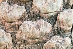 Fond de vigne d'écorce Peut être employé pour des éléments de conception ci-dessus Images stock