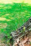 Fond de vigne d'écorce Peut être employé pour des éléments de conception ci-dessus Photographie stock libre de droits