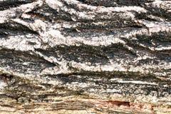 Fond de vigne d'écorce Peut être employé pour des éléments de conception ci-dessus Images libres de droits