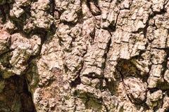 Fond de vigne d'écorce Peut être employé pour des éléments de conception ci-dessus Photo stock
