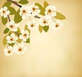 Fond de vintage avec le brunch de floraison d'arbre et Images libres de droits