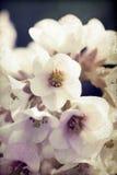 Fond de vintage de fleur de ressort Images stock