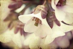 Fond de vintage de fleur de ressort Image stock