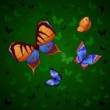 Fond de voler coloré de papillons Image libre de droits