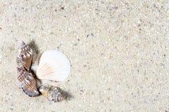 Fond de voyage avec le sable et les coquilles Photographie stock libre de droits