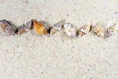 Fond de voyage avec le sable et les coquilles Photos libres de droits