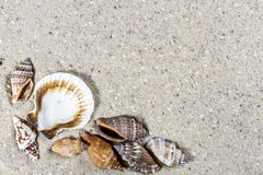 Fond de voyage avec le sable et les coquilles Photo stock