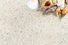 Fond de voyage avec le sable et les coquilles Images stock