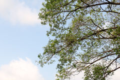 Fond de vue d'arbre Photos libres de droits