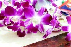 Fond 474 de vue de fleur d'orchidée Images stock