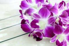 Fond de vue de fleur d'orchidée Photos stock