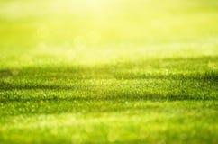 Fond de zone d'herbe verte image libre de droits