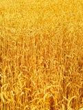 Fond de zone de blé Image stock