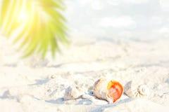 Fond defocused de tache floue de résumé, doucement modifié la tonalité bleu, nature de l'été tropical, rayons de lumière du solei photos stock