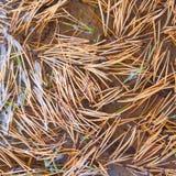 Fond des aiguilles de pin jaune dans l'eau Texture d'automne photo libre de droits