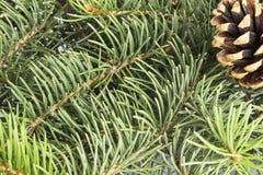 Fond des arbres de Noël avec le cône Photo stock