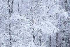 Fond des arbres forestiers d'hiver dans la neige Image stock