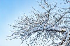 Fond des arbres pour une double exposition, beaucoup de branches, branches dans la neige, neige sur des branches, neige sur des a image libre de droits