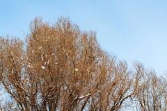 fond des arbres pour une double exposition, arbres contre le ciel photos libres de droits