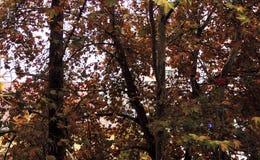 Fond des arbres sur le bureau images stock