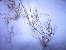 Fond des branches neigeuses images stock