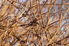 Fond des branches tordues nues d'un buisson dans les rayons du soleil égalisant Beau fond naturel de nature d'automne Textu images libres de droits