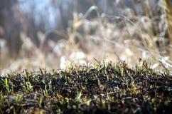 Fond des cendres de l'herbe brûlée photos libres de droits