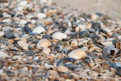 Fond des coquilles colorées de mer Photo libre de droits