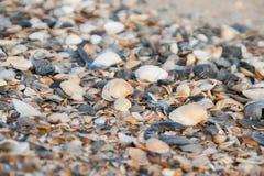 Fond des coquilles colorées de mer Photo stock