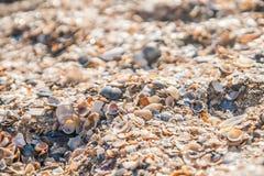 Fond des coquilles colorées de mer Image libre de droits