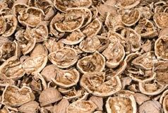 Fond des coquilles criquées de noix Photo stock