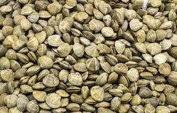 Fond des coquilles crues comestibles de mollusques et crustacés Photo stock