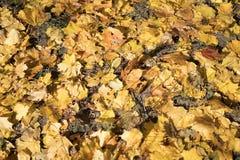 Fond des feuilles d'automne colorées sur le plancher de forêt photos libres de droits