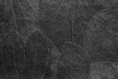 Fond des feuilles de couleur noire lumineuse Images libres de droits