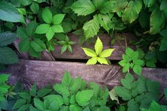 Fond des feuilles vertes et jaunes sur le fond en bois image stock