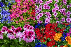 Fond des fleurs Photographie stock