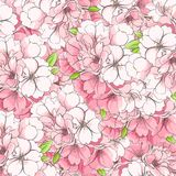 Fond des fleurs d'Apple-arbre Photographie stock