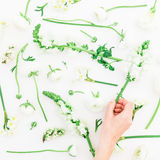 Fond des fleurs de source Modèle fait de fleurs blanches - le ranunculus, le muflier, les tulipes et la main de femme tiennent la Photo stock