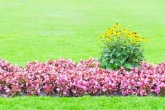 Fond des fleurs jaunes et roses Images stock