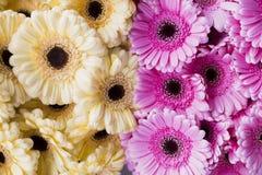 Fond des fleurs jaunes rosâtres Images stock