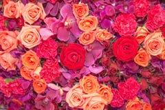 Fond des fleurs multi de couleur Images libres de droits