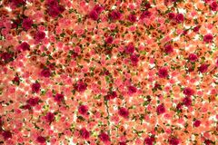 Fond des fleurs roses multicolores artificielles Photographie stock