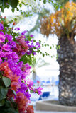 Fond des fleurs tropicales image libre de droits